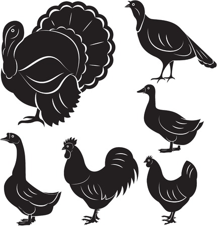 cock duck: vector set of different monochromatic birds farm