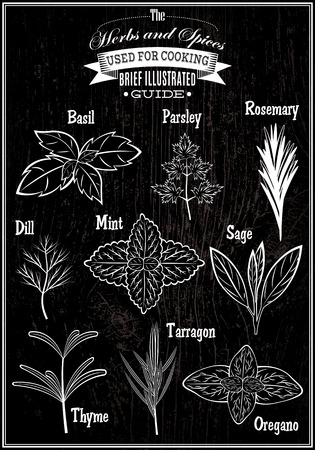 tarragon: set of vector images plant herbs for cooking Illustration
