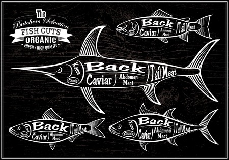 vector diagram cut carcasses salmon, swordfish, herring, tuna