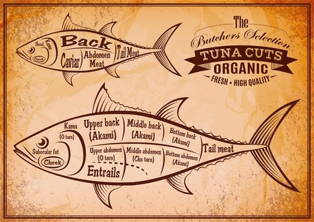 thunnus: retro poster with a detailed diagram of butchering tuna Illustration
