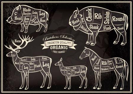 carnicero: cadáveres vector diagrama de corte de jabalí, bisonte, ciervo, caballo