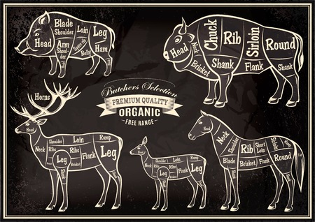 vector diagram cut carcasses of boar, bison, deer, horse