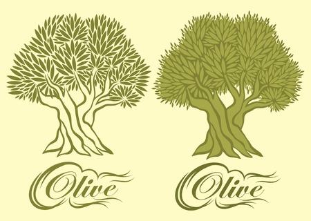 оливки: вектор с оливкового дерева для упаковки Иллюстрация