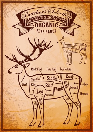 carcasses: vector diagram cut carcasses of deer venison Illustration