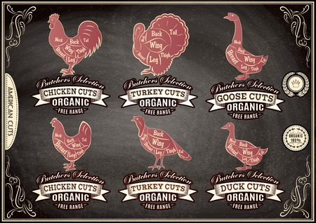 carcasses: vector diagram cut carcasses chicken, turkey, goose, duck Illustration
