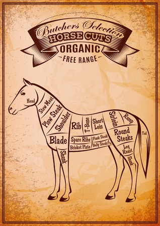 horse meat: diagram with cut carcasses of horse