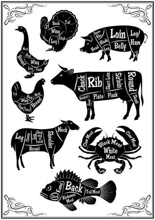 la marinera: un conjunto de diagramas de secciones de diferentes animales y mariscos