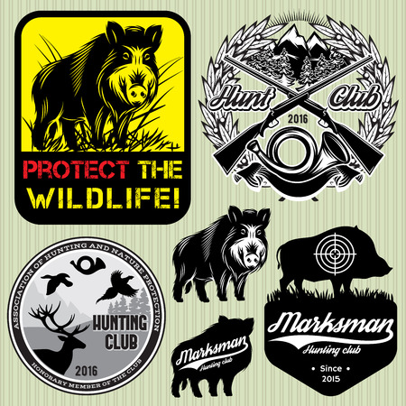 wild hog: set vector template with wild boar for hunting clubs