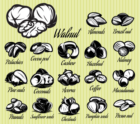 walnut: a set of eighteen stylish vector templates of nuts for menu