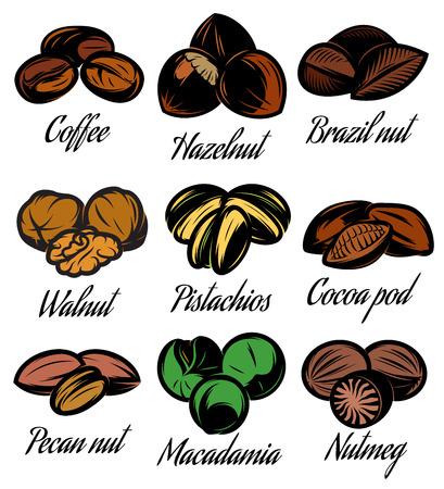 brazil nut: set of colored symbols patterns of different seeds, nuts, fruits Illustration
