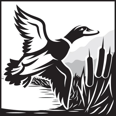 mallard: ilustración vectorial blanco y negro con el vuelo del pato salvaje sobre el agua