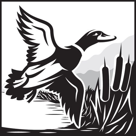 Monochrome vector illustration with flying wild duck over the water Stock Illustratie
