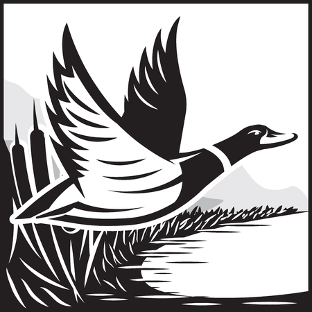Monochrome  illustration with flying wild duck over the water 向量圖像