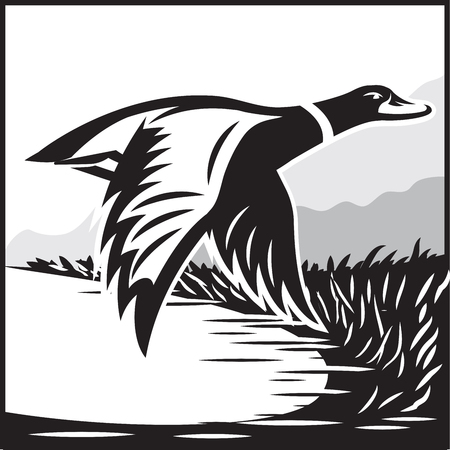 Monochrome vector illustration with flying wild duck over the water 向量圖像