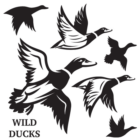 Vector set of flying wild ducks. Vector illustration.