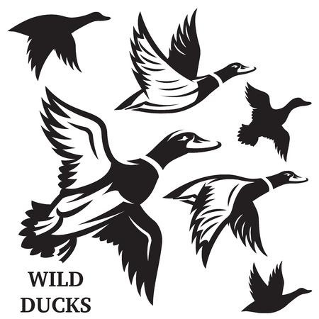 Wektor zestaw pływających dzikie kaczki. Ilustracji wektorowych.