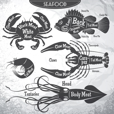 vector set of stylish diagrams cut of different seafood carcasses. Stock Illustratie