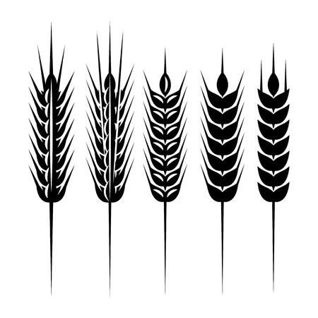 set of monochrome vector spikelets for scenery.