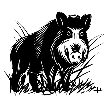 vector monochrome illustration with a wild boar in thicket of grass.