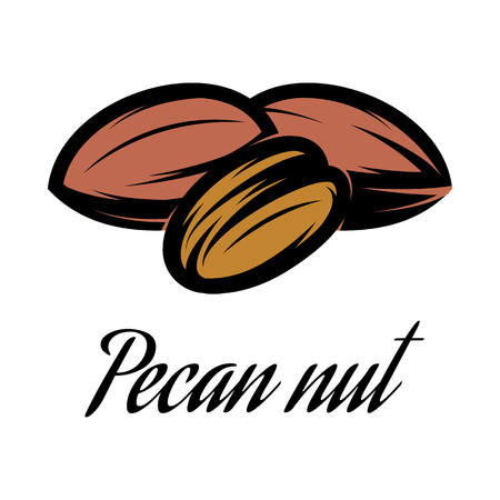 Vector color illustration of a Pecan nut.