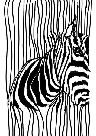 ink drawing: Zebra Illustration