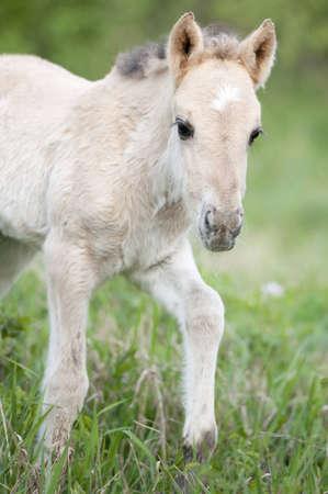 Wild filly walking around  Stock Photo - 9591673