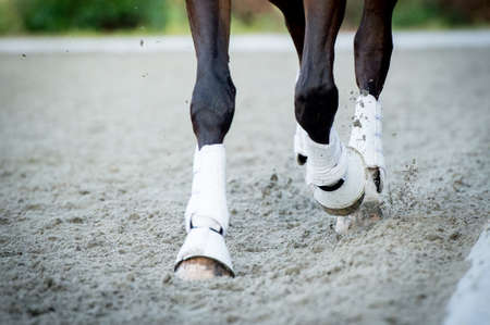 Closeup of the hooves from a horse while in trot on an outside track