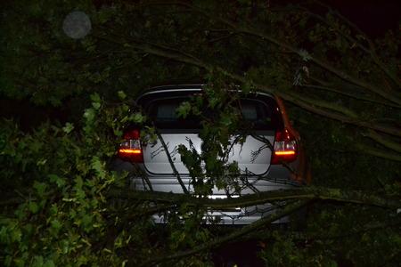 demolish: Car damaged by tree
