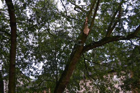 demolish: Broken tree