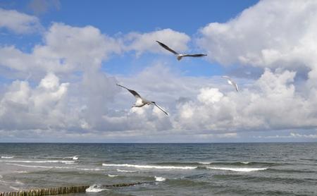 the seagulls: Seagulls