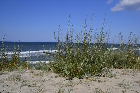 polen: beach Stock Photo