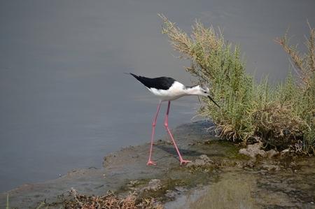 seabirds: Assorted seabirds on Dubai Creek