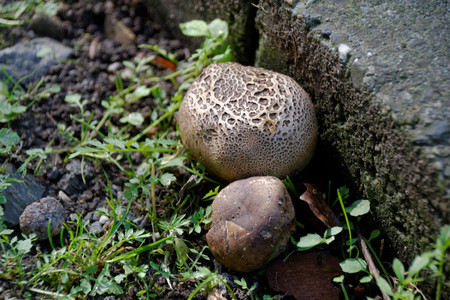fungi: Wild Mushrooms