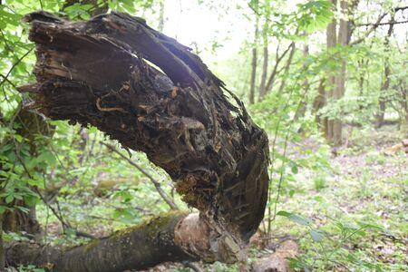 The Morasko meteorite nature reserve, europe Reklamní fotografie