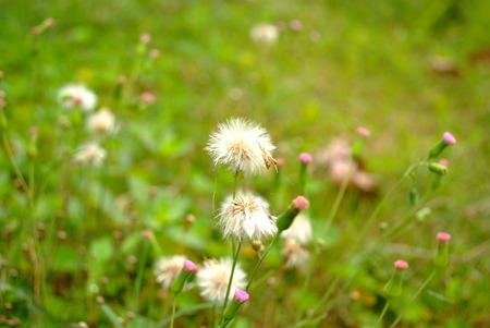 bud weed: Plant