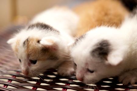 cute kittens: close up of a cute kittens