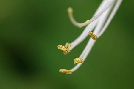 borde de flores: primer plano de lirio en el medio silvestre Foto de archivo