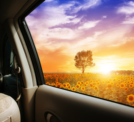 campo de flores: campo de girasol al atardecer, ver en el coche Foto de archivo