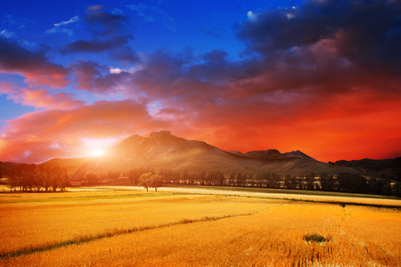 north china: Wheat field at sunset in north China Stock Photo