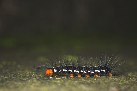 nymphs: Caterpillar Stock Photo