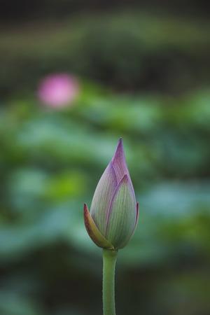 seed beads: Lotus in summer
