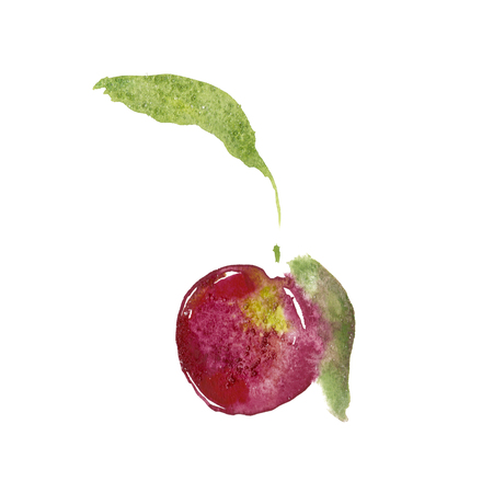 Watercolor plum illustration with ripened fruits. Watercolor isolated plum art with white background high resolution. Stock Photo