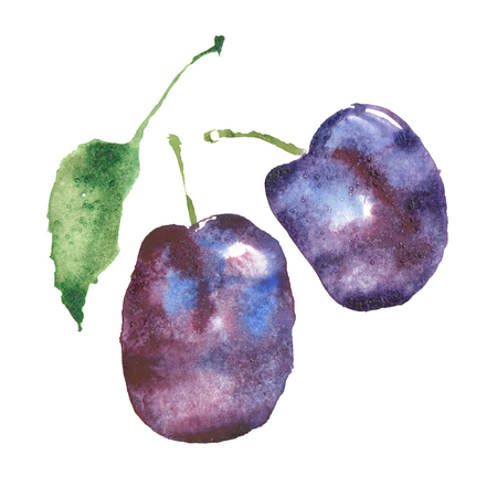 Watercolor isolated plum art with white background high resolution.