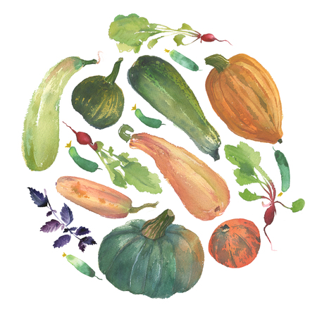 Watercolor vegetable circle with a natural illustration of veggies for design sign, agribusiness logo, organic food banner, healthy brand labels. Freshness watercolor painting pumpkin, squash, radish, 写真素材