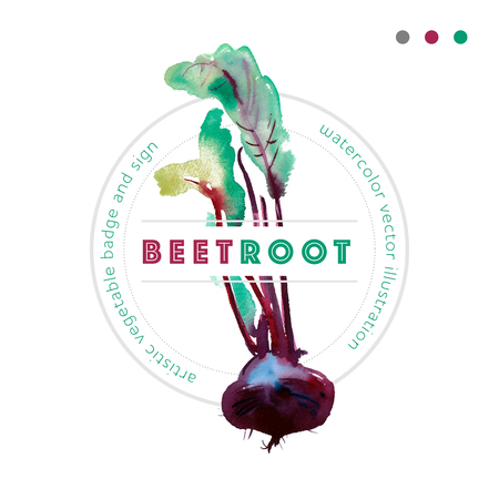 Watercolor vector beetroot badge, banner with beetroot, vector Beetroot vector, beetroot, food ingredients, beetroot Illusztráció