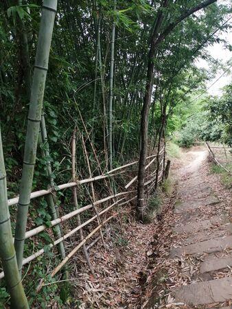King Bamboo