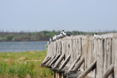 A flock of seagulls are sitting on the bridge on a warm sunny day. Stock Photo - 84522279