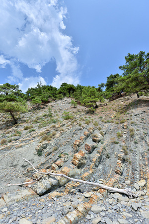 Beautiful structure of the rock, consists of a solid rock in the form of layers. On a steep rock grow coniferous trees and lies the dry trunk of a tree.