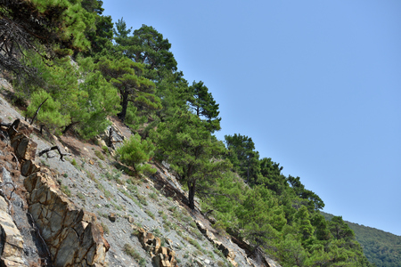 Beautiful structure of the rock, consists of a solid rock in the form of layers. On a steep rock grow coniferous trees. Banco de Imagens