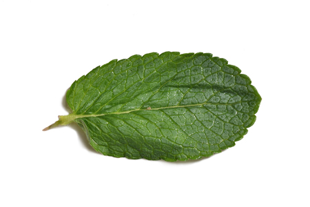 A beautiful and fresh mint leaf on a white background. Close-up.